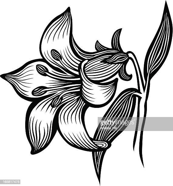 lily - easter lily stock illustrations