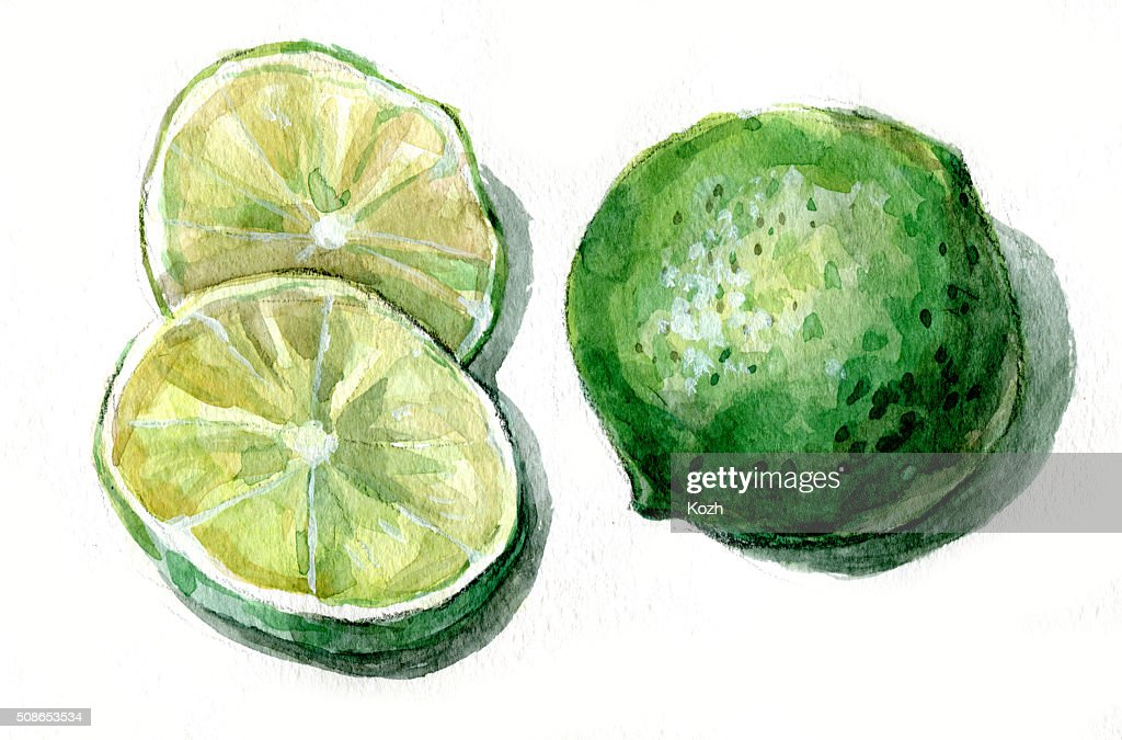 lime fruit : Stock Illustration