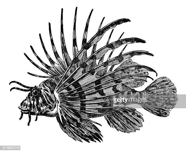 lion fish - spiked stock illustrations