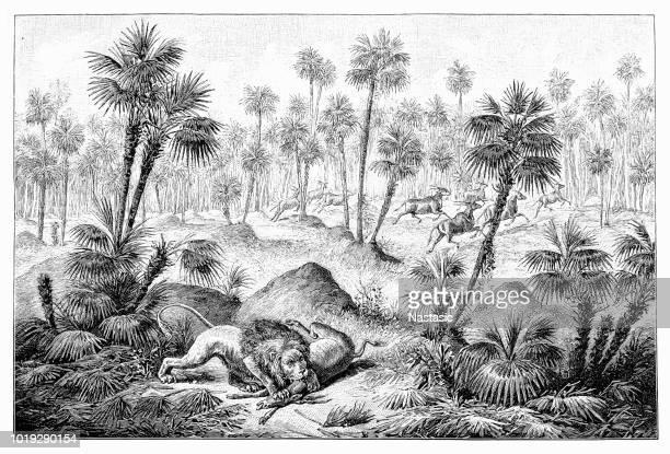 illustrations, cliparts, dessins animés et icônes de lion de chasse - afrique paysage