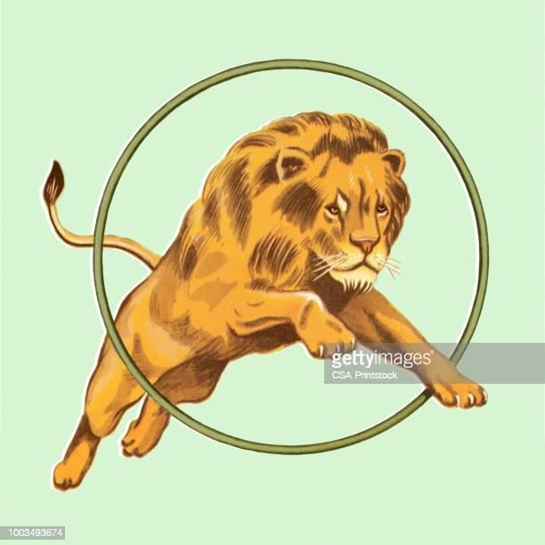 lion jumping through hoop - plastic hoop stock illustrations