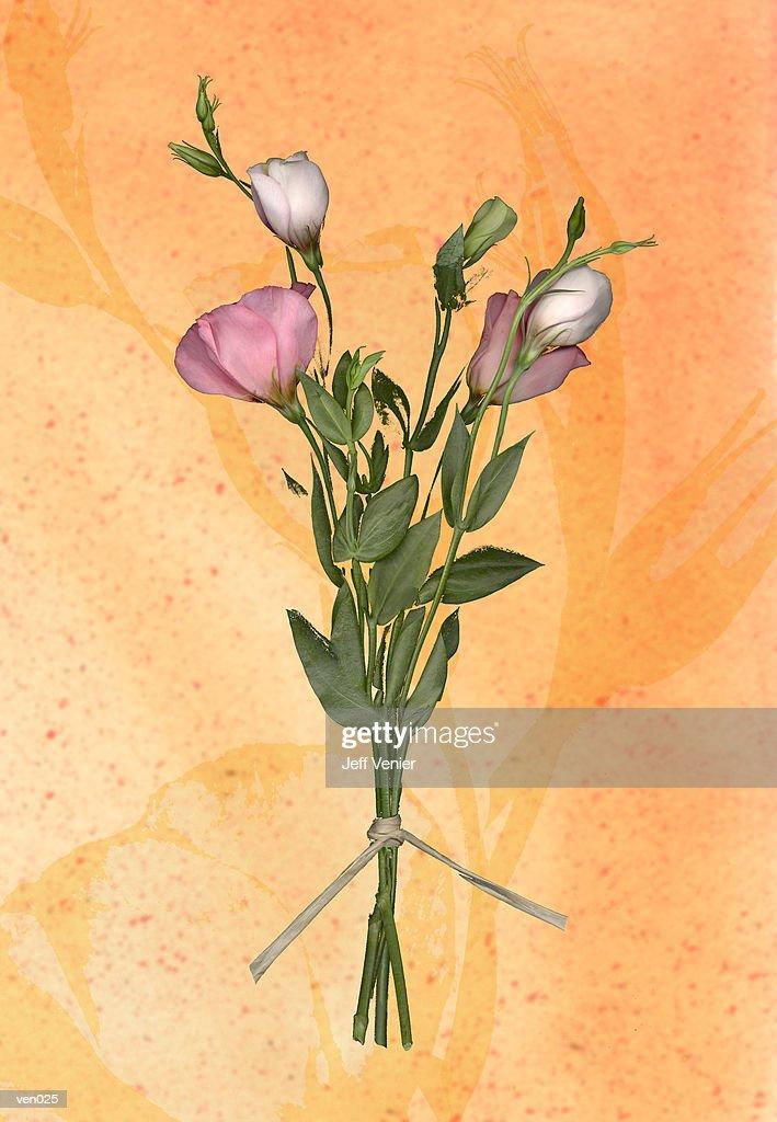 Lisianthus Bouquet : Ilustración de stock