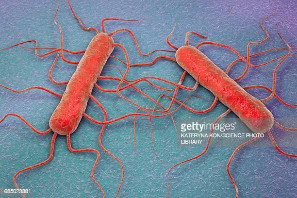 listeria monocytogenes, illustration - unhealthy living stock illustrations