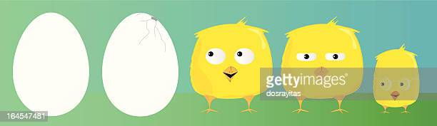little chickens, vector characters