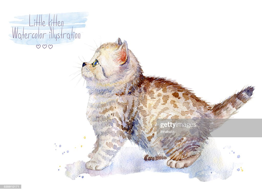 Little fluffy kitten.  Spotted cat. : Stock Illustration