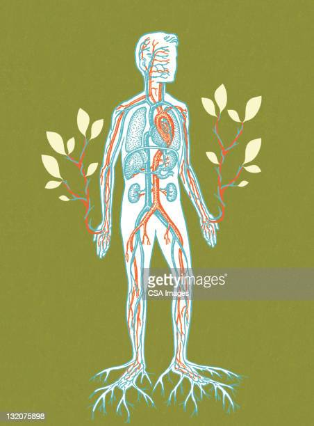 ilustrações, clipart, desenhos animados e ícones de homem de estar - termo anatômico