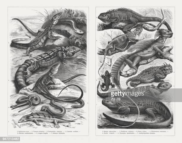 Lizards, wood engravings, published in 1897