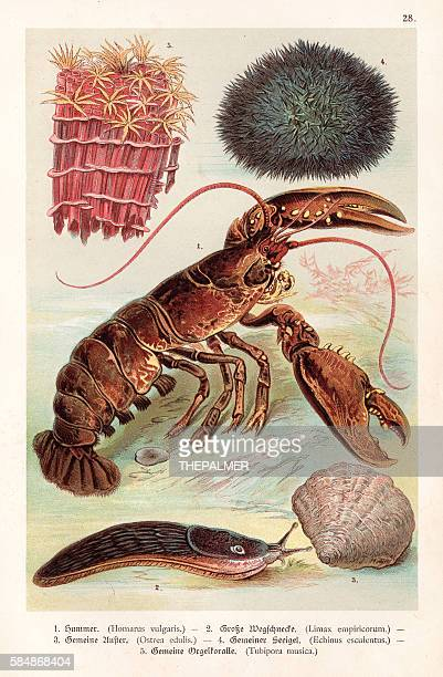 Lobster and sea creatures 1888