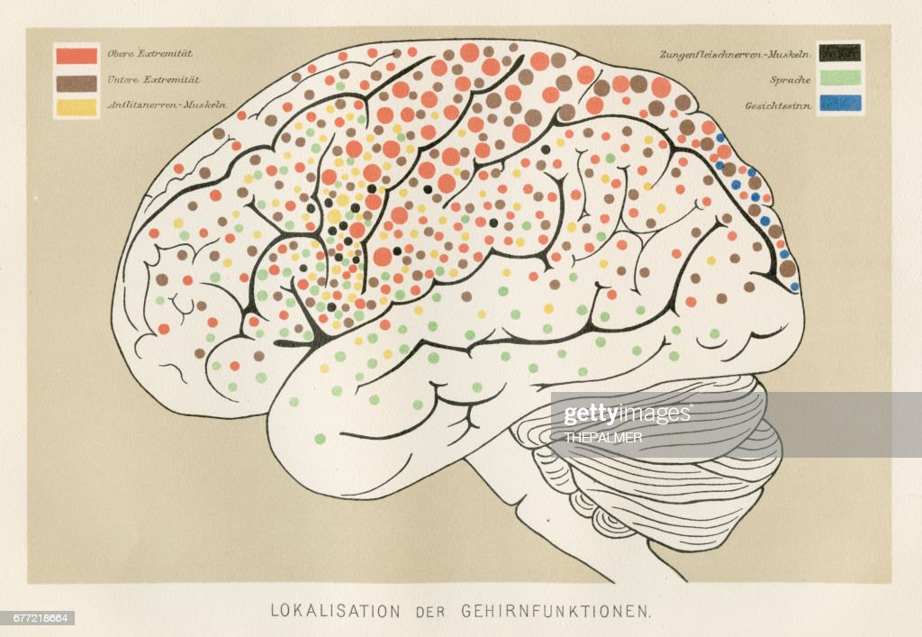 Localization Brain Functions Anatomy Engraving 1857 Stock ...