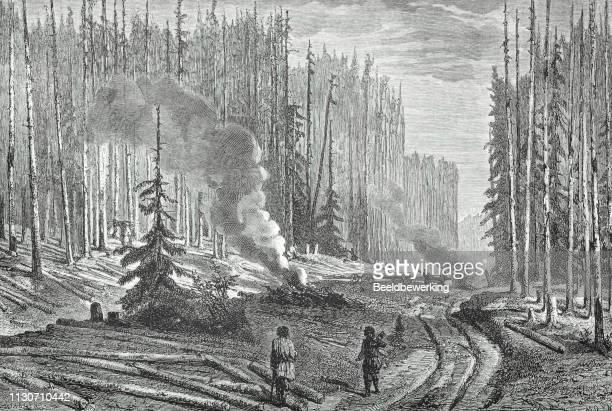 ilustrações, clipart, desenhos animados e ícones de registrando floresta russa ilustração 1873 ' a terra e seu povo ' - cultura russa