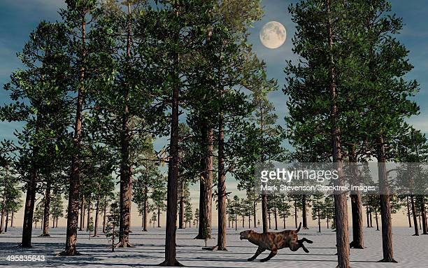 A lone Sabre-Tooth Tiger running through a snow covered forest during Earth's Pleistocene epoch.