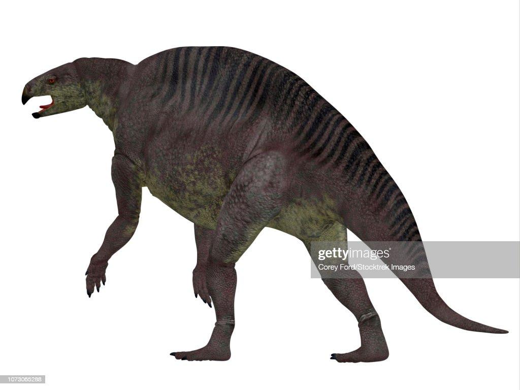 Lotosaurus dinosaur, rear view. : stock illustration