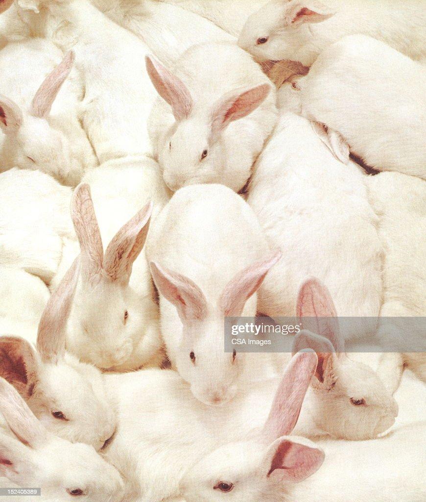 Lotes de conejos. : Ilustración de stock