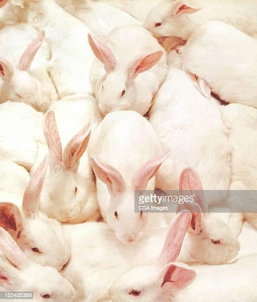 ilustraciones, imágenes clip art, dibujos animados e iconos de stock de lotes de conejos. - grupo grande de animales