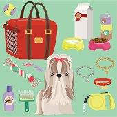 Lovely Shih-Tzu puppy equipment