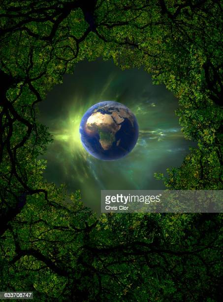 low angle view of earth, night sky and tree canopy - low angle view stock illustrations