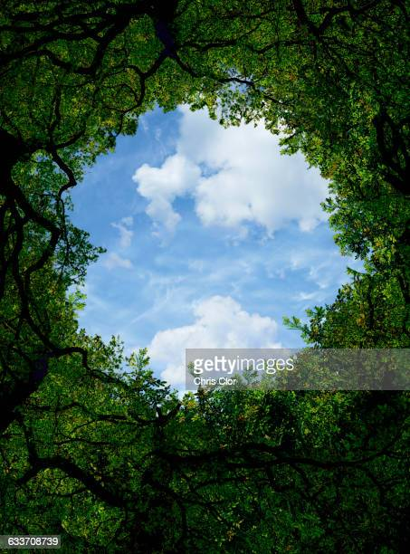 low angle view of sky and tree canopy - digital composite stock illustrations, clip art, cartoons, & icons