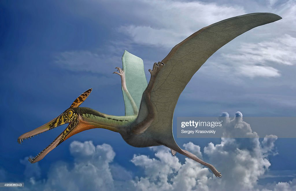 Ludodactylus sibbicki, a pterosaur from the Lower Cretaceous Crato Formation of Brazil. : Stock Illustration