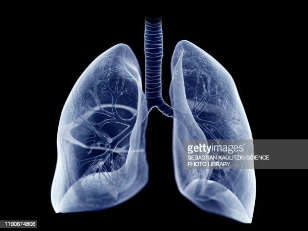 lung, illustration - human lung stock illustrations