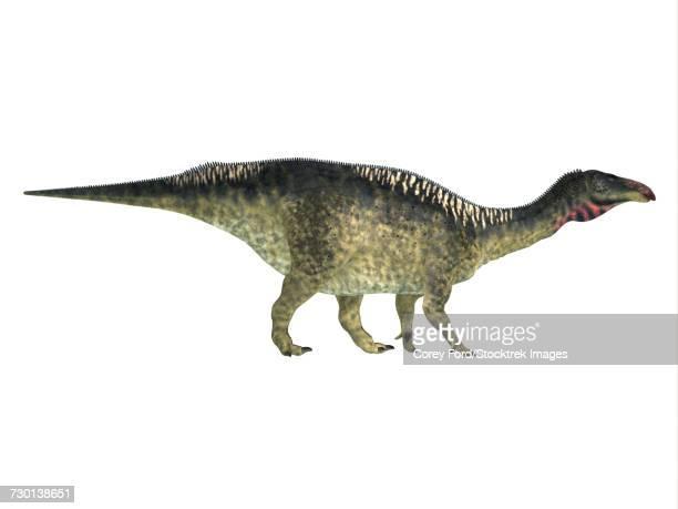 Lurdusaurus dinosaur, side profile.