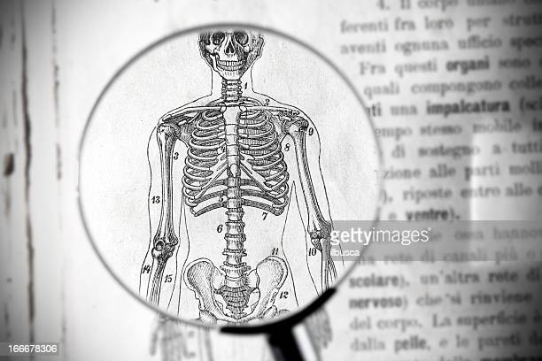 magnifying glass on antique medical book showing skeleton parts - human spine stock illustrations, clip art, cartoons, & icons