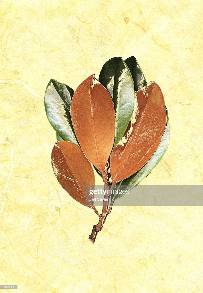 Magnolia Sprig on Marble Background : Stock Illustration