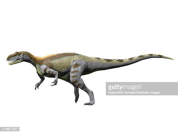 Magnosaurus nethercombensis, Middle Jurassic of England.