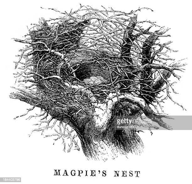 magpie's nest - magpie stock illustrations