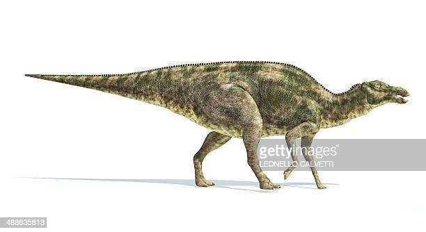 maiasaura dinosaur, artwork - hadrosaurid stock illustrations, clip art, cartoons, & icons