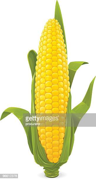 maize - corn stock illustrations, clip art, cartoons, & icons