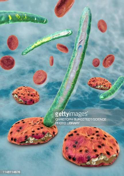 malaria, illustration - malaria parasite stock illustrations