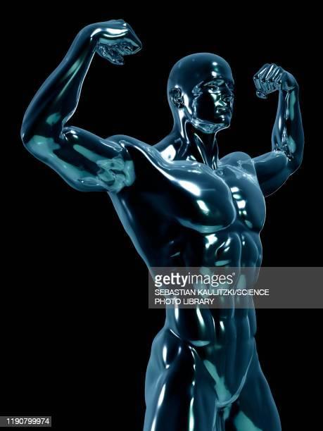 male anatomy, illustration - the human body stock illustrations