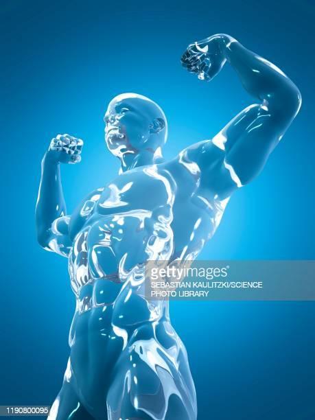 male anatomy, illustration - shiny stock illustrations