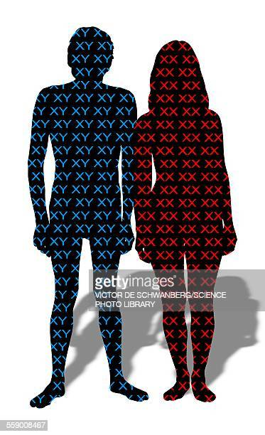 male and female chromosomes - male likeness stock illustrations