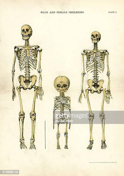 雄および雌ハルマゲドン - 人体図点のイラスト素材/クリップアート素材/マンガ素材/アイコン素材