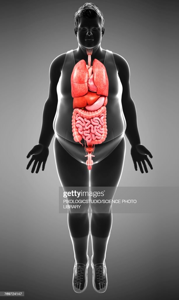 Male Body Organs Illustration Stock Illustration | Getty Images