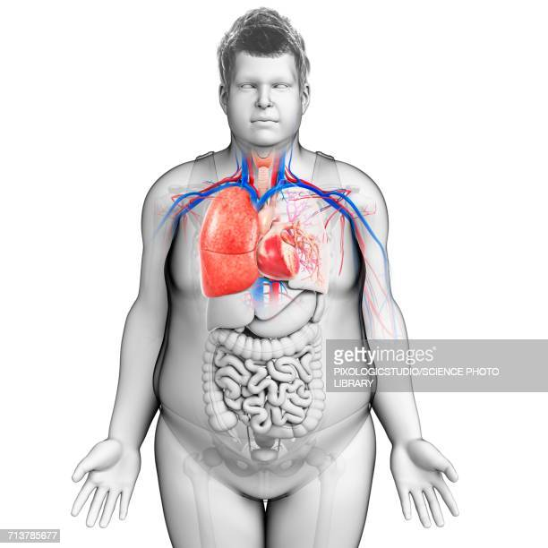 Male Chest Stock Illustrations and Cartoons   Getty Images