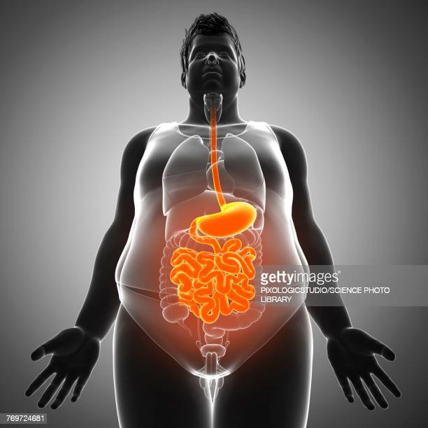 male digestive system, illustration - heavy stock illustrations, clip art, cartoons, & icons