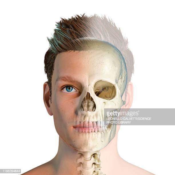 male head with skull, illustration - the alphabet stock illustrations