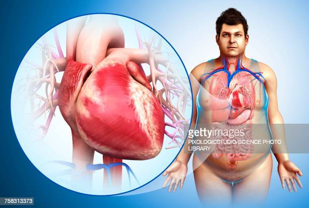 Male heart, illustration