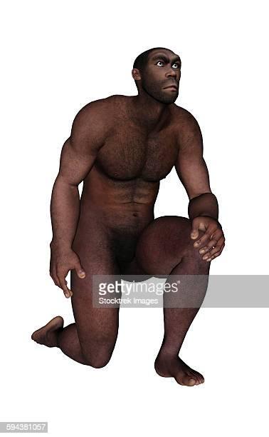 Male homo erectus kneeling, white background.