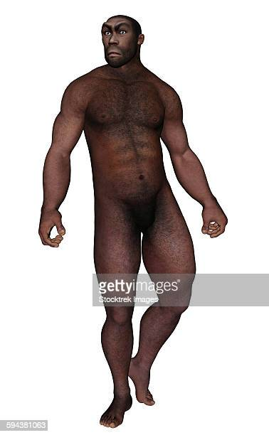 illustrazioni stock, clip art, cartoni animati e icone di tendenza di male homo erectus looking aside, white background. - paleolitico