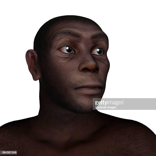 Male homo erectus portrait, white background.