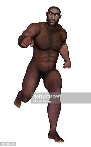 Male homo erectus running, white background.