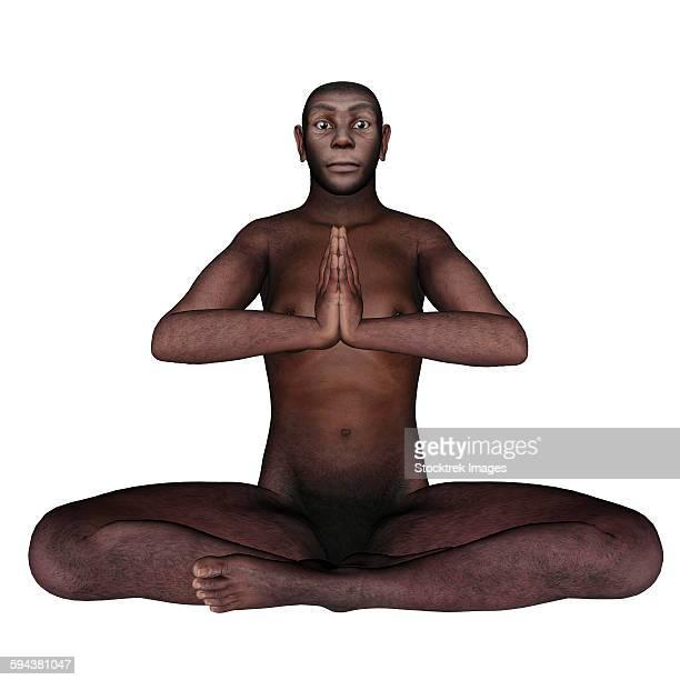 Male homo erectus sitting in meditation, white background.