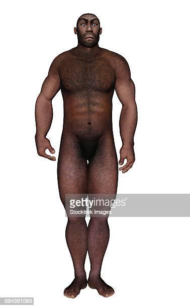 Male homo erectus standing, white background.