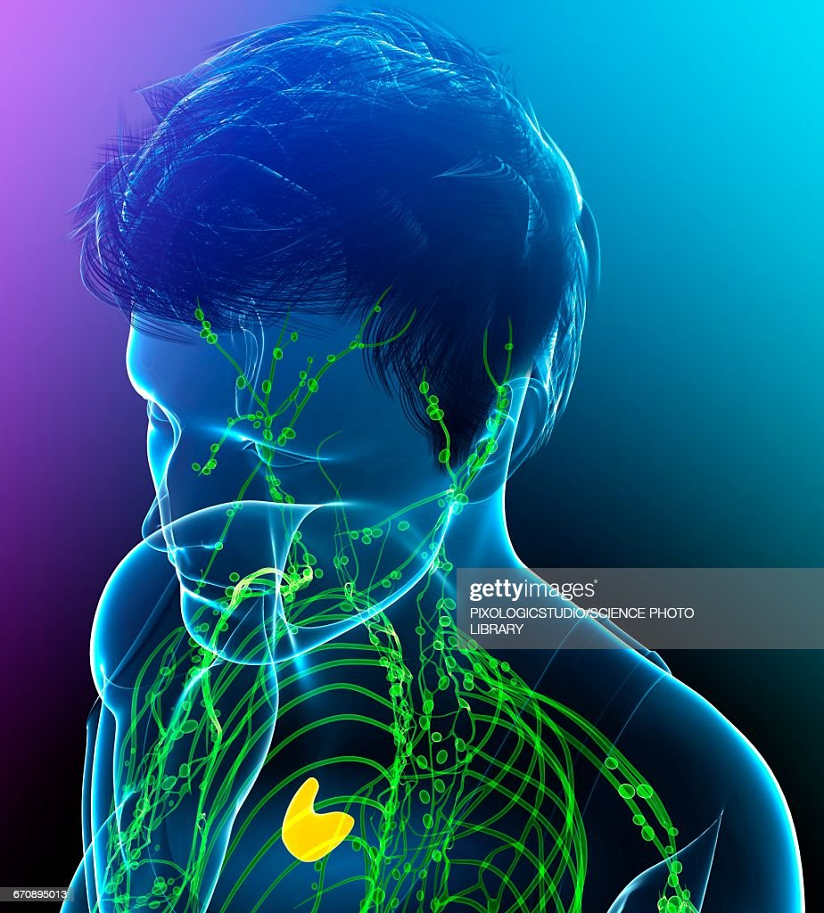 Male lymphatic system, illustration : stock illustration