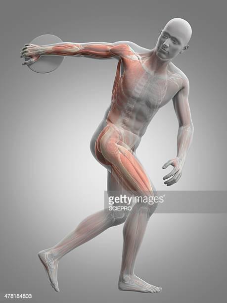 male musculature, artwork - discus stock illustrations, clip art, cartoons, & icons