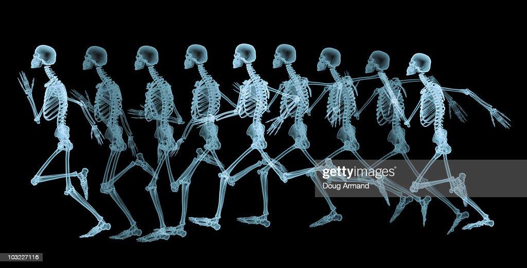 Male skeleton running : stock illustration