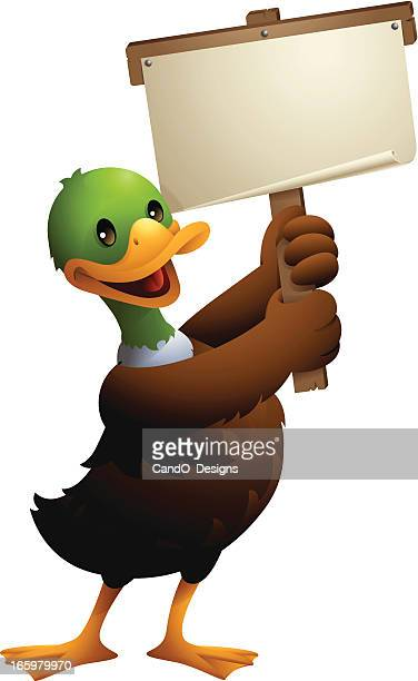 mallard duck: holding banner - duck stock illustrations, clip art, cartoons, & icons